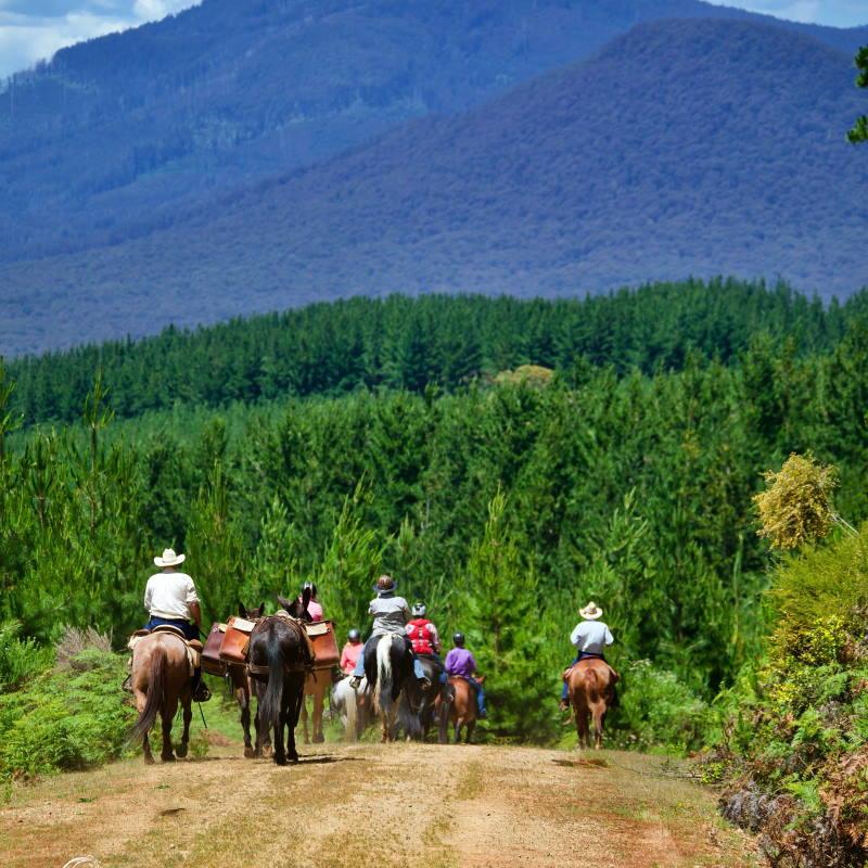 great victorian rail trail horse riding tour3
