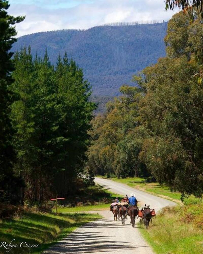 pack saddling australia horse riding trips